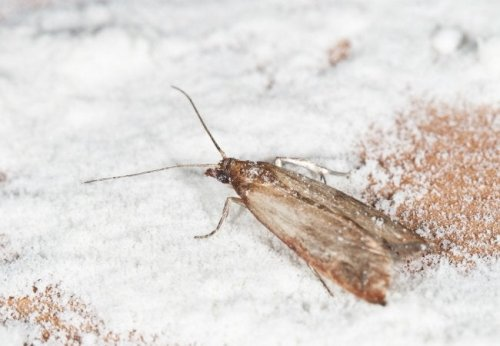 How To: Get Rid of Pantry Moths