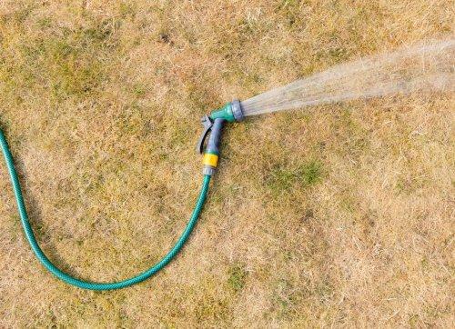 9 Ways to Help Your Garden Survive a Heat Wave