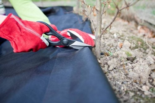 The Best Landscape Fabric for Blocking Out Weeds
