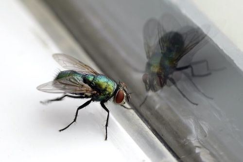 How To: Get Rid of Flies in the House