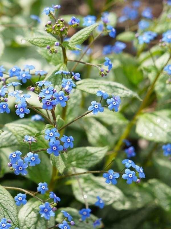 39 Plants You'll Love if You Hate Fall Yard Work