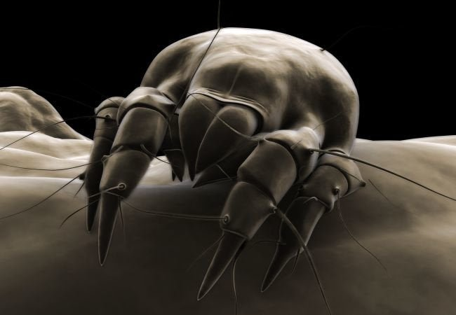 3 Fixes for Dust Mites
