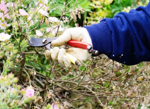 How To: Plant a Food Forest for Foraging at Home