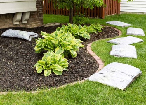 The Best Things You Can Do for Your Garden Soil