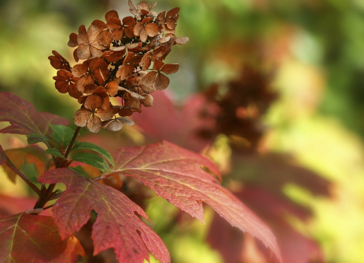 30 Ways to Color Your Yard This Autumn