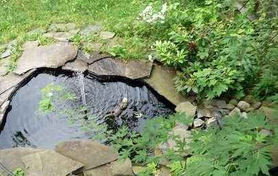 Top Tips for Installing a Small Backyard Pond