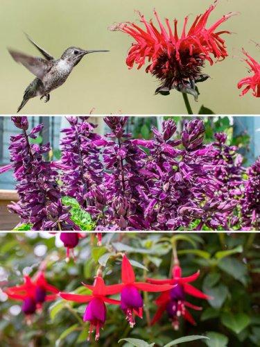 3 Container Garden Combos for Attracting Pollinators