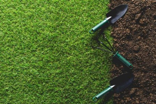 Solved! How Long Does Grass Take to Grow?