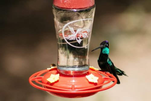 The Best Hummingbird Feeders for Your Garden