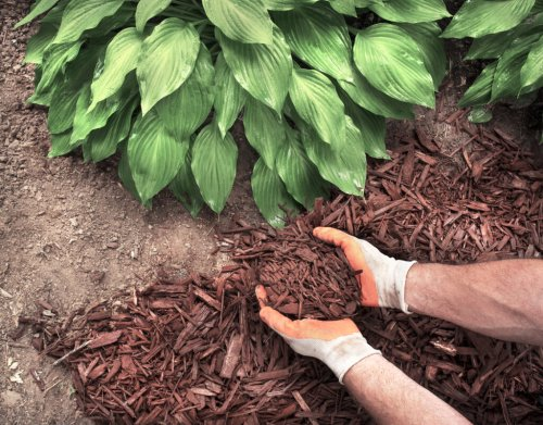 Solved! When to Plant Hostas