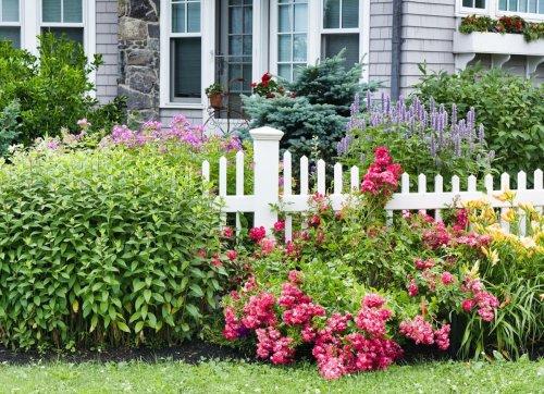 25 No-Effort Plants for a Foolproof Landscape