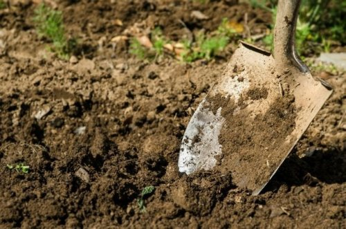 Double Digging Boosts Soil Health in Your Garden