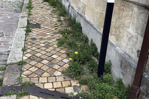 Bordeaux : Trottinettes et herbes folles