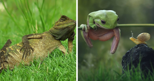 Photographer Accidentally Captured A Photo Of This Extremely Chill Lizard Basking In The Sun (+21 More Of His Pics)
