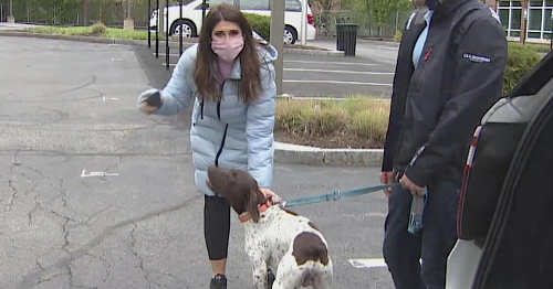 Reporter Who Was Reporting On A Stolen Dog Sees The Dognapped Puppy, Confronts The Thief