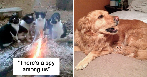 50 Adorable Animals Who Have Brothers From Other Mothers