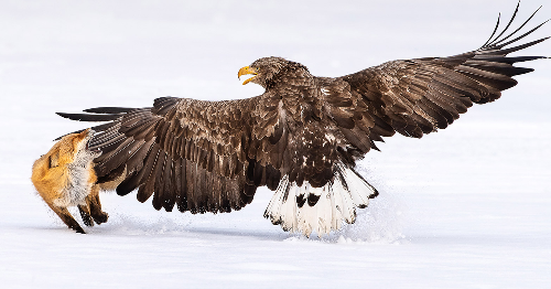 Finalists Of The Bird Photographer Of The Year 2021 Have Been Announced