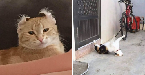 112 Of The Funniest Cat Pics Shared By 'Cat Virus.Exe'