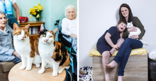 'National Cat Awards' Share Wholesome And Amazing Stories Of These 12 Heroic Cats