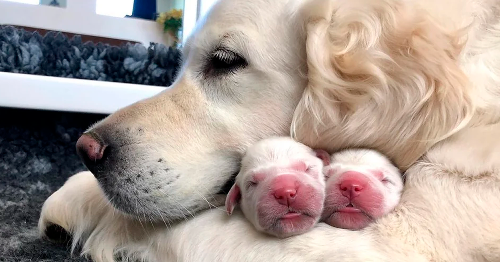 109 Proud Dog Mommies With Their Puppies (New Pics)