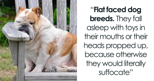 'Pets That People Think Are Cute, But Really Are Not': Vet Explains How 6 Cute Pet Breeds Suffer From Very Serious Health Problems