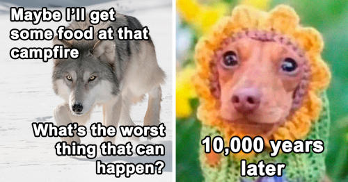 90 Hilarious History Memes That Should Be Shown In History Classes (New Pics)