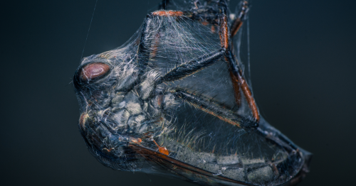 I Sold My Macro Lens And These Are 23 Of My Best Shots
