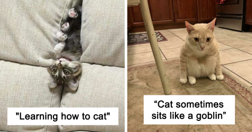 100 Times Cats Looked So Derpy, Owners Had To Share Their Pics Online