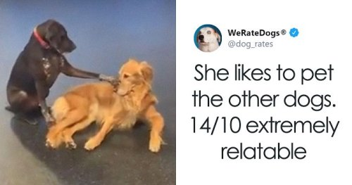 Adorable Dog Insists On Petting Other Dogs At Daycare, And The Confused Pups Just Accept It