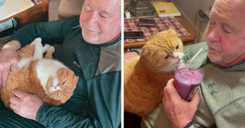 Cat Refuses To Leave His Grandpa's Side After He Got Diagnosed With Cancer