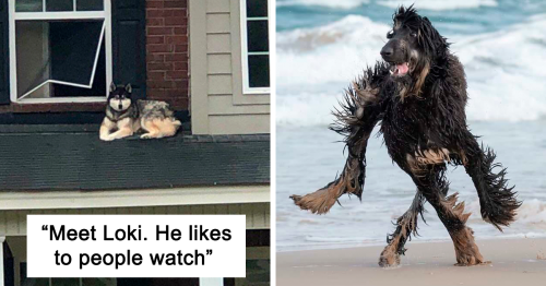 """""""What's Wrong With Your Dog?"""": People Are Posting Pictures Of 'Malfunctioning' Dogs"""