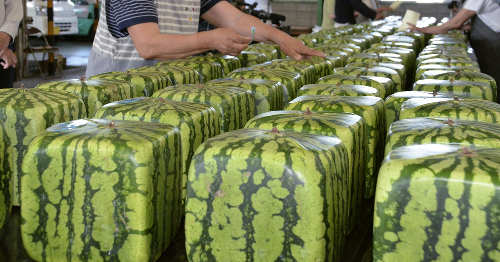 141 Facts That Prove Japan Is Unlike Any Other Country (New Pics)
