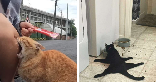 'Cat.Exe Has Stopped Working': This IG Account Collects Hilarious Images Of Broken Cats (50 Pics)
