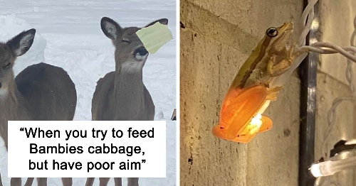 This Facebook Group Is All About Poor Wildlife Photos And They Are So Bad They're Good (169 New Pics)