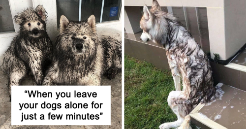 50 Hilarious Dog Posts To Put A Smile On Your Face (New Pics)