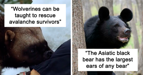 72 Lesser-Known Facts About Animals That Made People Say 'Aww' (New Pics)
