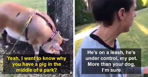 Local Karen Loses It After She Spots A Woman Taking Her Emotional Support Pig On A Walk
