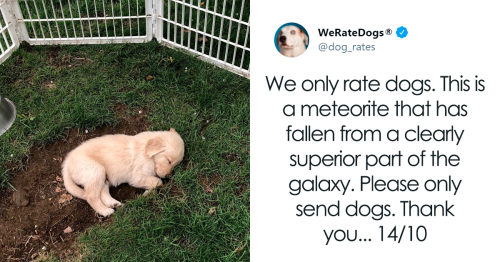 50 Times People Asked To Rate Their Dogs And Got Hilariously Wholesome Results (New Pics)