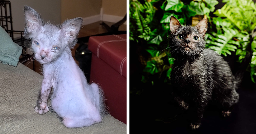 This Kitten Has A Rare Mutation That Makes Her Look Like A Werewolf