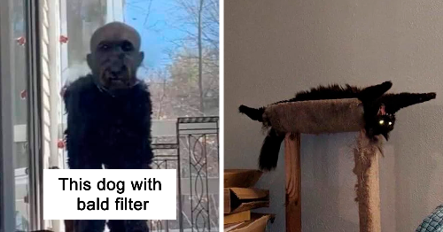 92 Times Pets Accidentally Looked Terrifying