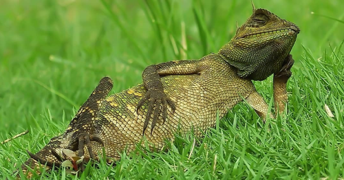 Photographer Accidentally Captured A Photo Of This Extremely Chill Lizard Basking In The Sun