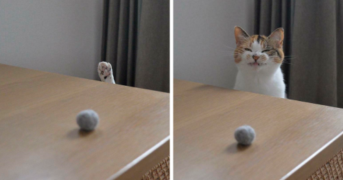 95 Times Cat Owners Got Fascinated By Their 'Teefies' (New Pics)