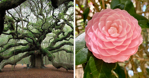 Botany Enthusiasts Are Sharing Pictures Of Gorgeous Plants And They're Plant-Tastic 85 Pics)