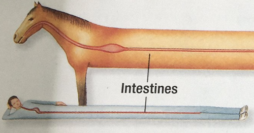 96 Funny Science Diagrams That Are So Bad They're Good, As Shared On This Page