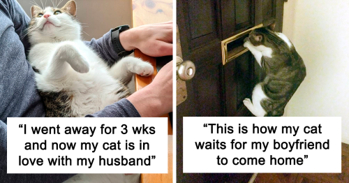 """50 """"Shameless"""" Pets That Stole Their Owners' Partners And Didn't Even Feel Sorry About It"""
