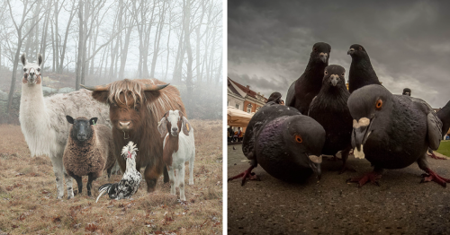 30 Animals That Look Like They're About To Drop The Hottest Albums Of The Year