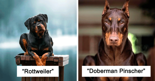 30 Of The Smartest Dog Breeds As Proved By Science