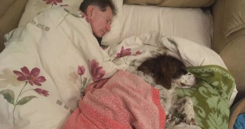 Adopted Dog Is Too Old And Sick To Sleep Upstairs, Family Takes Turns Sleeping With Him On the Couch Every Night
