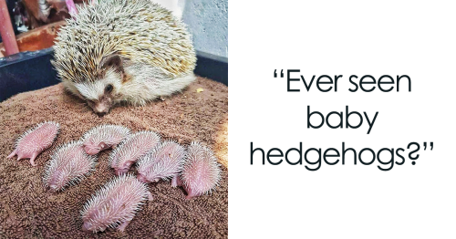 109 Baby Animals That'll Make You Say 'Aww'