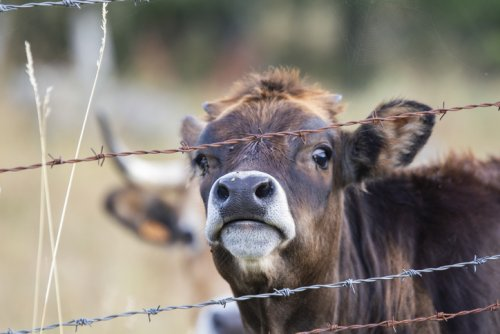Appeal Denied: 3 Pennsylvania Men To Remain In Prison For 20-41 Years After Convicted Of Sex With Horses, Goats, Dogs & Cows
